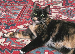 Oriental Rugs are useful and functional